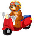 a bear riding scooter vector image