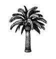 ink sketch date palm vector image vector image