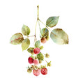 berries isolated on white background vector image vector image