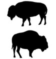american bison silhouette vector image