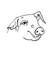 black pig head silhouette vector image