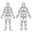 human body muscles silhouette vector image vector image