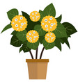 potted flower with blooming yellow bud flat vector image