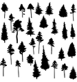 set conifer trees vector image vector image