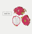 hand drawn set of exotic fruits isolated pitaya vector image