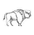 american buffalo doodle art vector image vector image