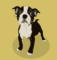 boston terrier vector image