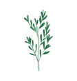 cartoon abstract green plant icon vector image vector image