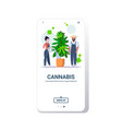 farmers couple watering cannabis industrial hemp vector image vector image