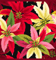 seamless poinsettia flowers vector image vector image