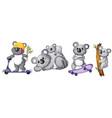 set koala bear character vector image