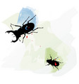hand sketched set two beetles insects drawing vector image