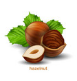 hazelnuts with green leaves on a white background vector image vector image