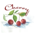 watercolor cherry fruit label with the inscription vector image