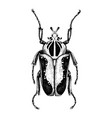 hand sketched goliath beetle insects collection vector image vector image
