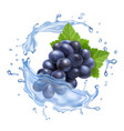 red grape branch in water splash realistic vector image vector image