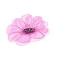sakura pink flower vector image vector image