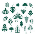 set abstract stylized tropical leaves vector image