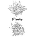 set of bouquets peonies vector image