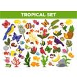tropical and exotic fruits birds fishes and vector image