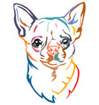 colorful decorative portrait of dog chihuahua vector image
