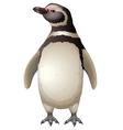 Magellanic Penguin vector image vector image