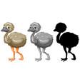 set emu character vector image