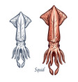 squid seafood isolated sketch icon vector image vector image