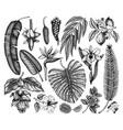 Tropical plants exotic flowers citrus fruits palm