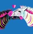graphics enamored portraits of zebras vector image