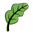 leaf nature fresh ripe icon vector image