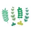 Seaweed leaf vector image vector image