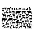 animal activity silhouettes vector image