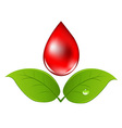Blood Drop With Leafs vector image vector image