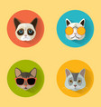 cat portraits with flat design vector image vector image