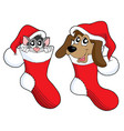 cute cat and dog in christmas socks vector image