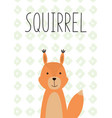 cute little squirrel hand drawn vector image vector image