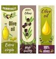Olive Banner Set vector image vector image