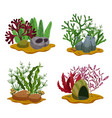 seaweeds compositions set vector image vector image