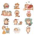 set kawaii hedgehog characters isolated vector image