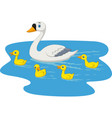 cartoon swan family swimming in the pond vector image vector image