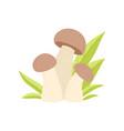 forest edible mushroom growing grass wild organic vector image vector image