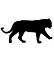 silhouette beautiful tiger on a white background vector image