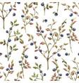 watercolor blueberry pattern vector image