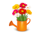 Colorful fresh spring flowers in orange watering vector image vector image