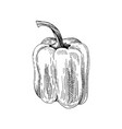 hand drawn sweet pepper vector image vector image