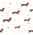 seamless pattern with dog and graass vector image vector image