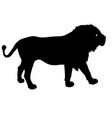 silhouette of the lion on a white background vector image