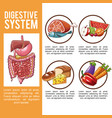 digestive system poster vector image