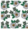 poppy flowers bud botanical decoration pattern vector image